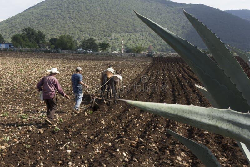 Planta mexicana de los granjeros para la cosecha fotografía de archivo