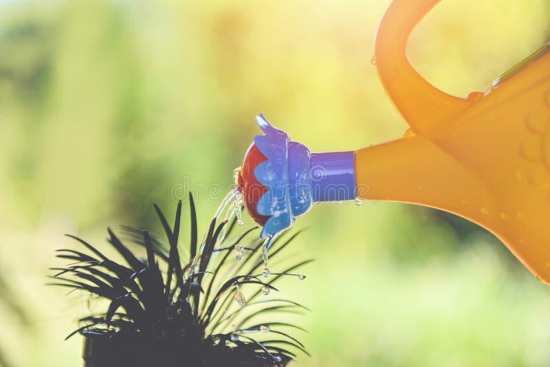 Planta molhando com a lata molhando colorida no potenciômetro no jardim - conceito das ferramentas de jardinagem fotos de stock royalty free