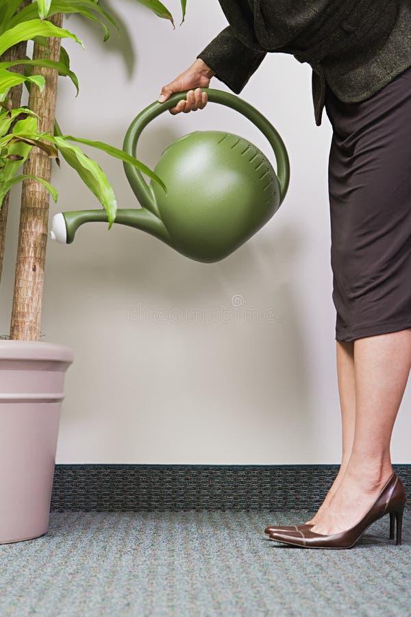 Planta molhando da mulher de negócios foto de stock royalty free