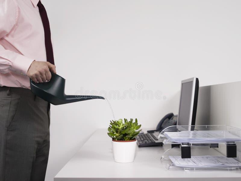 Planta molhando masculina da mesa do trabalhador de escritório fotos de stock