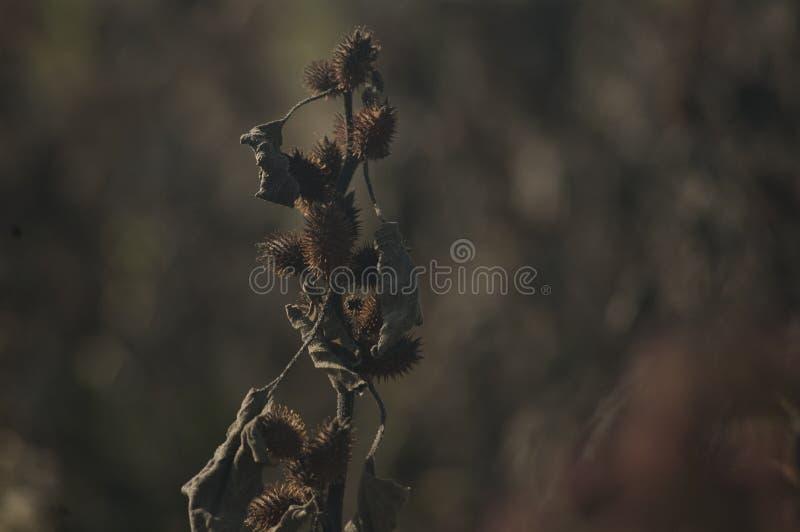 planta muerta con un fondo borroso neutral fotos de archivo libres de regalías