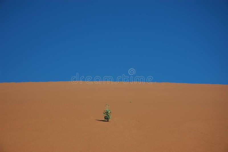 Planta na duna de areia imagem de stock
