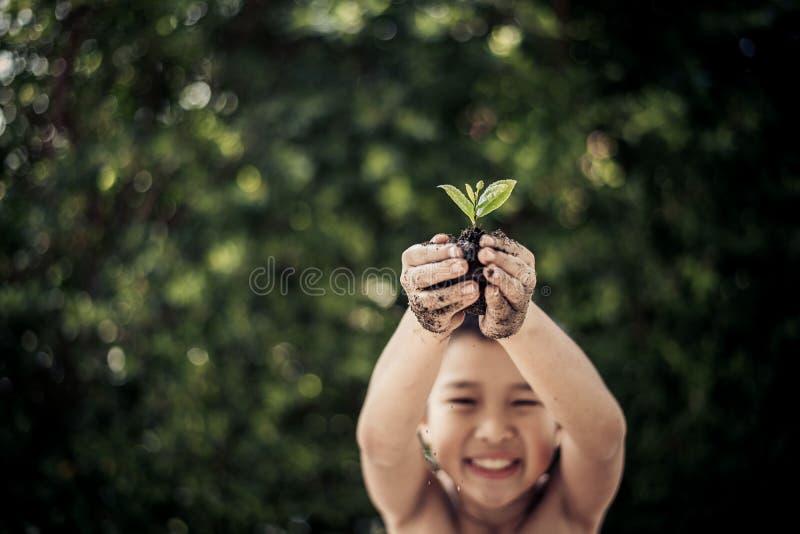 Planta na mão do menino imagem de stock