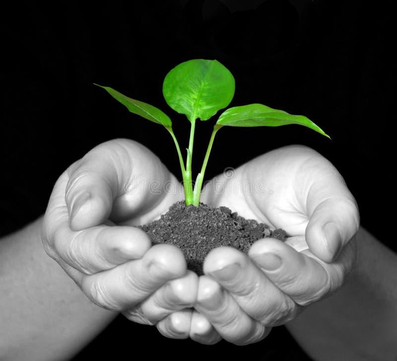Planta nas mãos imagens de stock royalty free