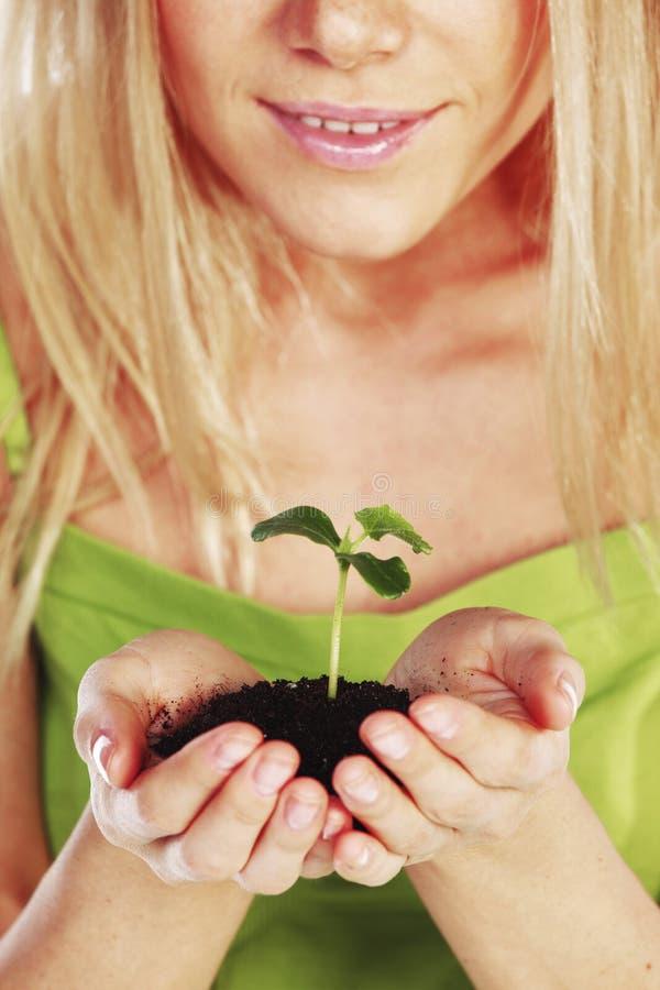 Planta nas mãos louras imagem de stock