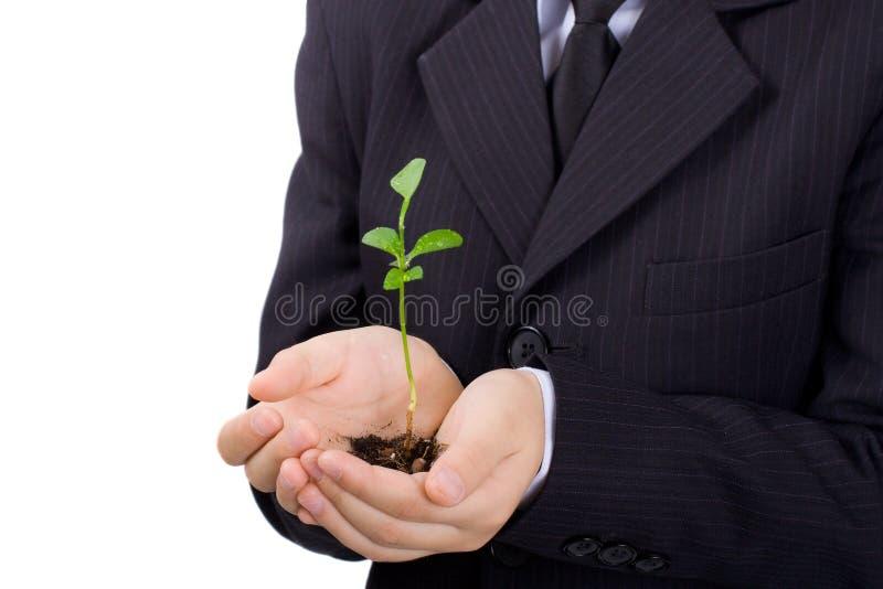 Planta nas palmas do menino, isoladas foto de stock