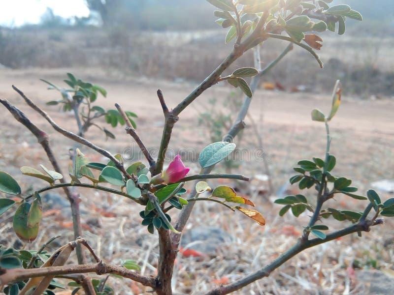 Planta natural do samall fotografia de stock