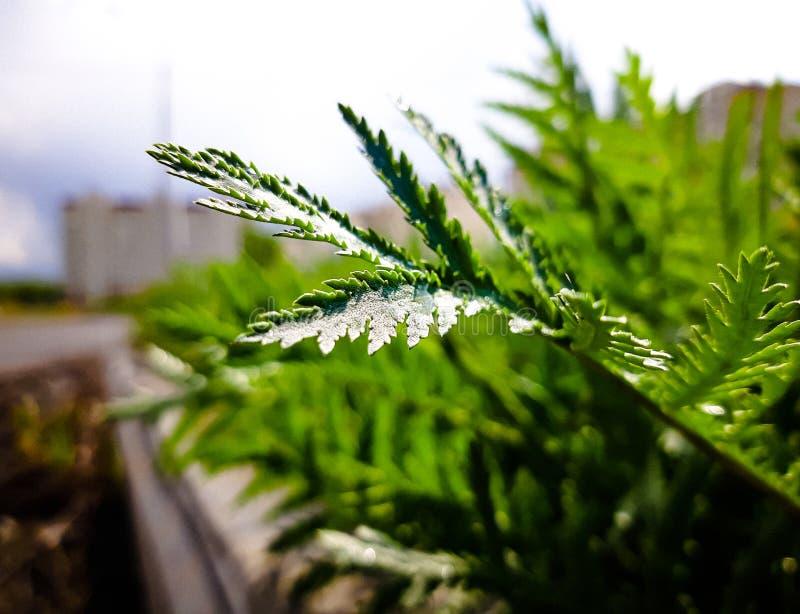 Planta natural en el aire abierto, en la ciudad, sola imagen de archivo