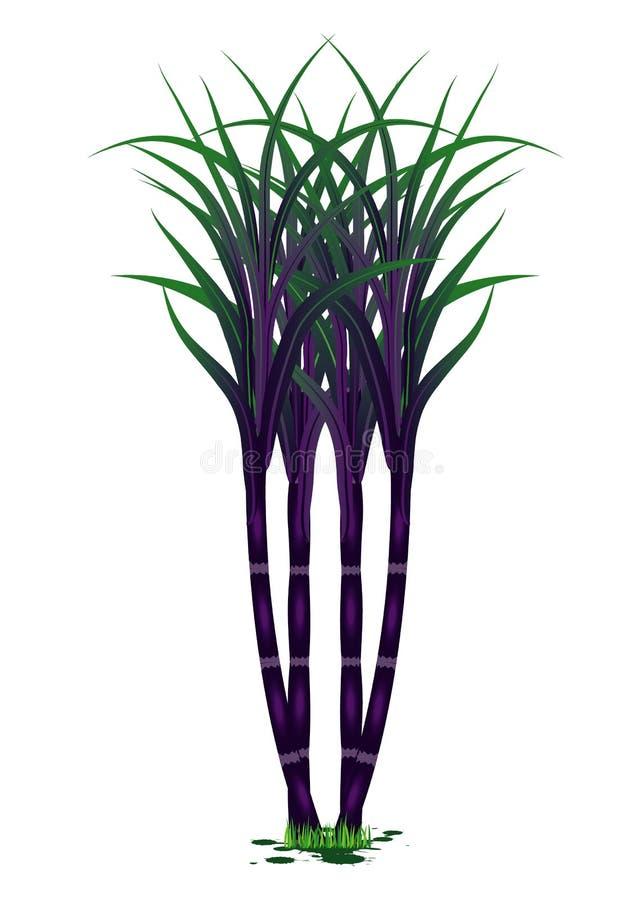 Planta negra de la caña de azúcar libre illustration