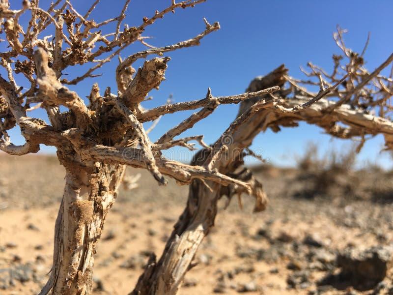 Planta no deserto fotografia de stock royalty free