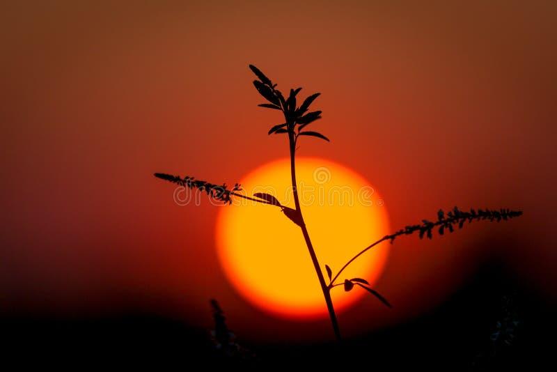 Planta no fundo grande do sol fotos de stock royalty free