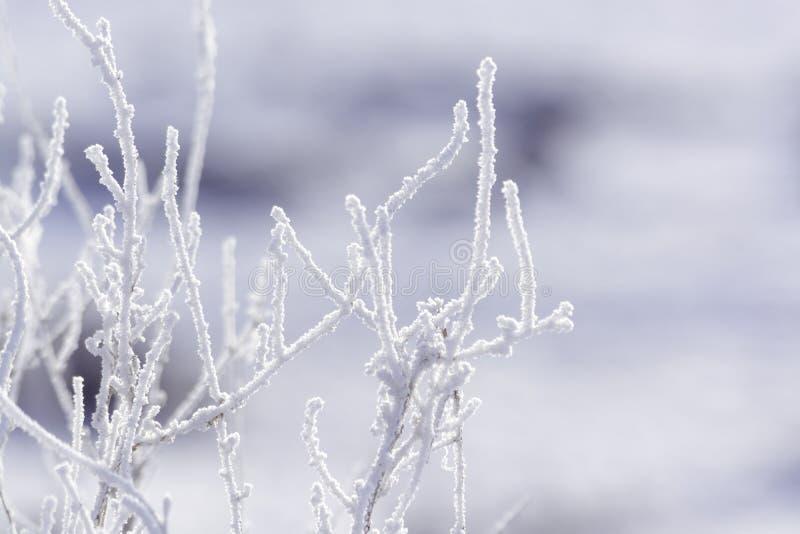Planta no inverno Para o fundo foto de stock