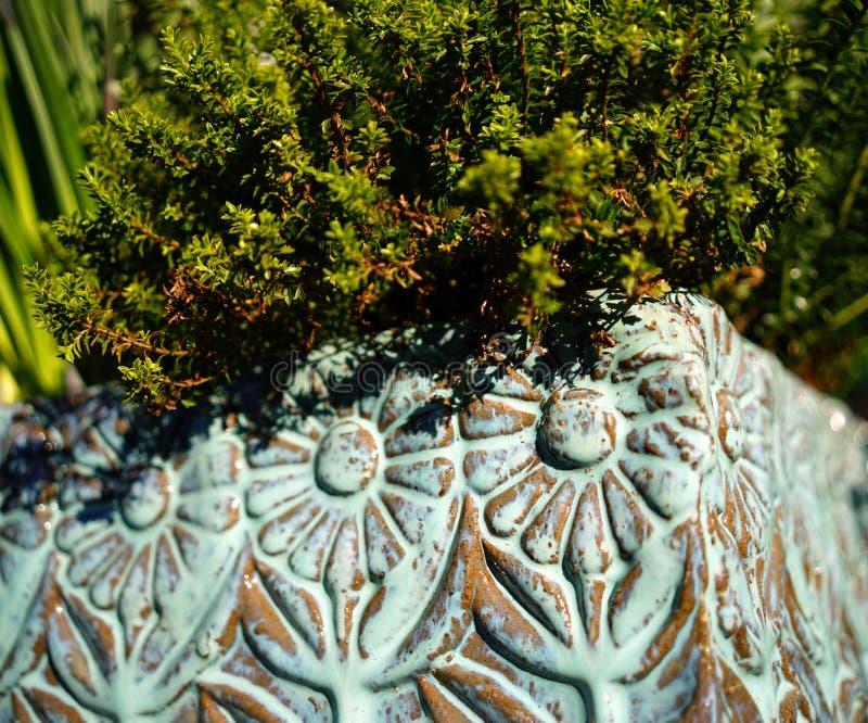 Planta no potenciômetro de flor verde fotografia de stock royalty free
