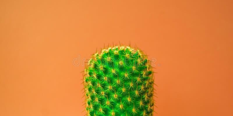 Planta no rosa Projeto mínimo da arte dos verdes tropicais Arte contemporânea fotos de stock