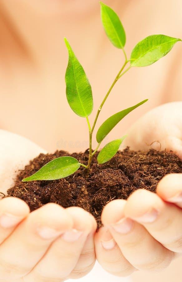 Planta nova. imagens de stock