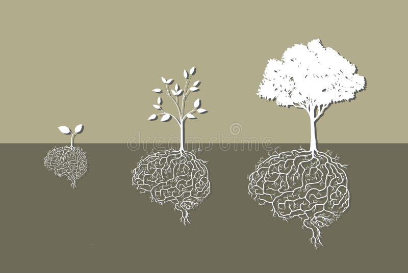 Planta nova com raiz do cérebro, ilustração do vetor