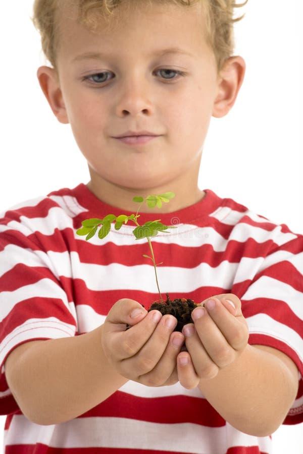 Planta nova da terra arrendada do menino fotografia de stock