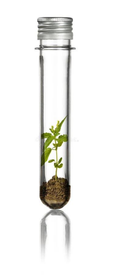 Planta nova em uma câmara de ar fotos de stock royalty free