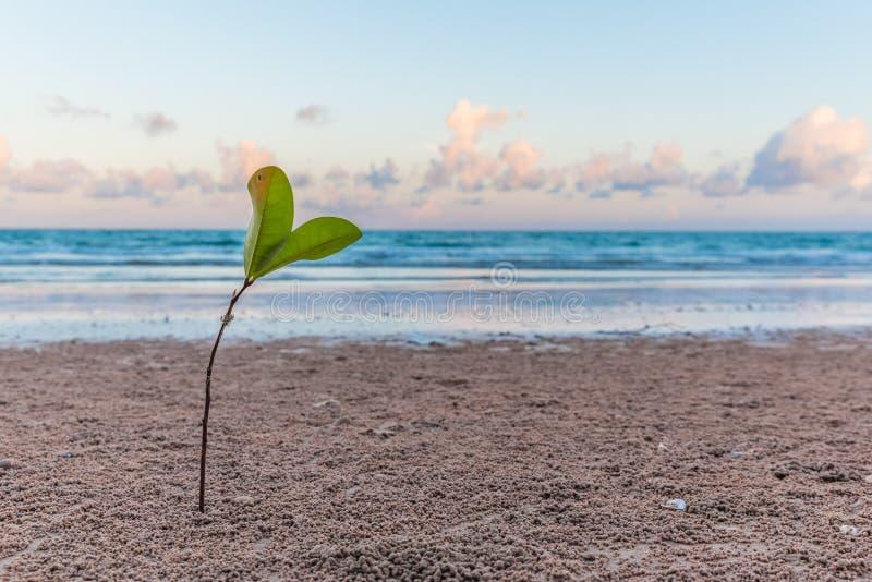Planta nova na praia imagem de stock