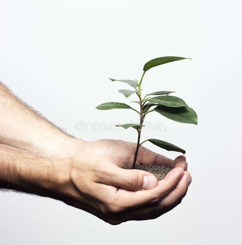Planta nova nas mãos humanas fotografia de stock royalty free