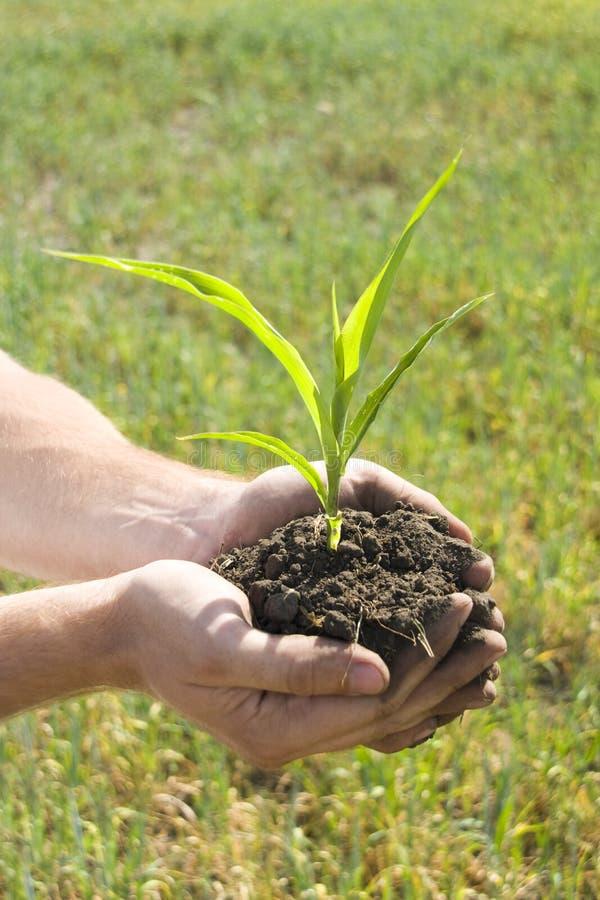 Planta nova nas palma da mão fotos de stock royalty free