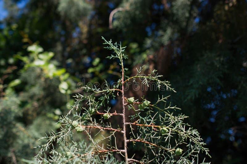 Download Planta Nova No Fundo Da Natureza Foto de Stock - Imagem de país, árvore: 80101740