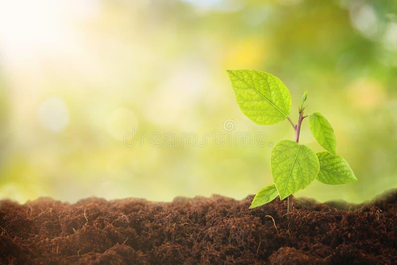 a planta nova que cresce durante o dia ensolarado com bokeh ilumina-se conceito novo do começo e da ecologia fotos de stock royalty free