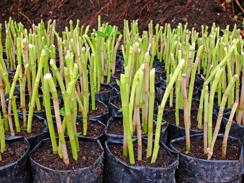 Download Planta nova foto de stock. Imagem de horticulture, flor - 29829126