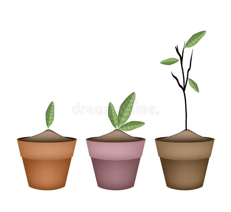 planta ornamental hermosa en macetas de cermica ilustracin del vector