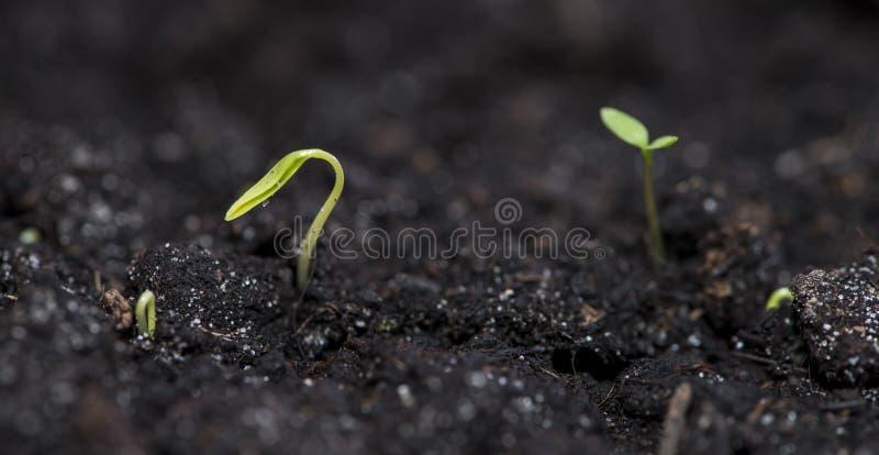 Planta på mörk bakgrund royaltyfria bilder
