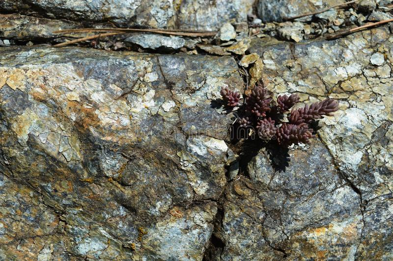 a planta pequena cresceu na pedra fotos de stock