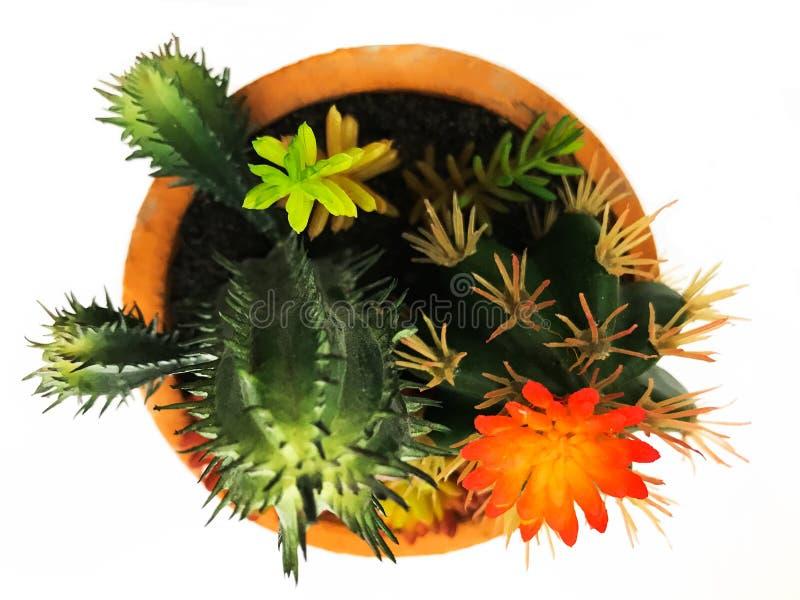 Planta pequena do cacto com flor em uma foto do estoque da imagem de imagem do potenciômetro foto de stock royalty free