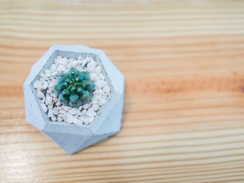 Planta pequena do cacto no potenciômetro moderno fotografia de stock royalty free