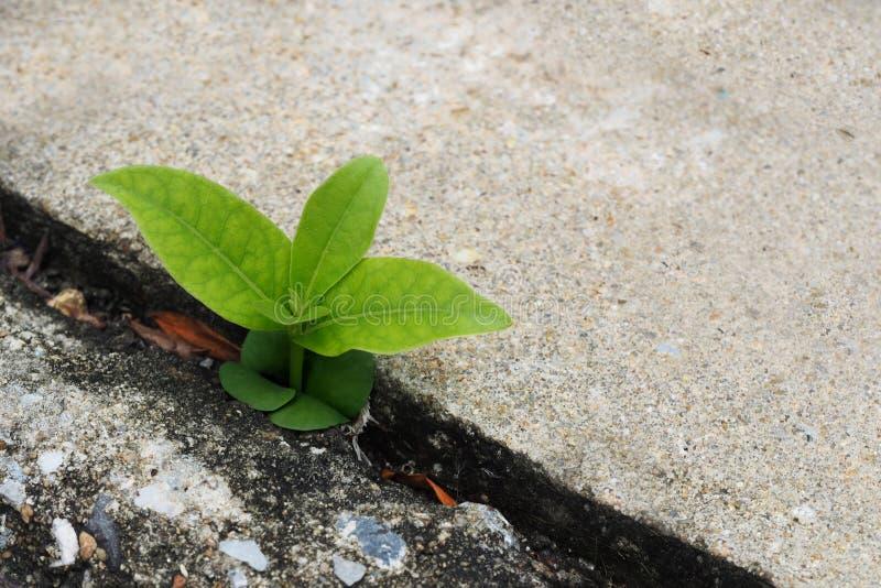 A planta pequena germina cresce acima no assoalho do cimento fotografia de stock royalty free
