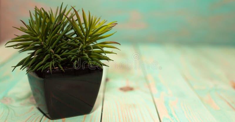 A planta pequena no lugar preto do potenciômetro foto de stock