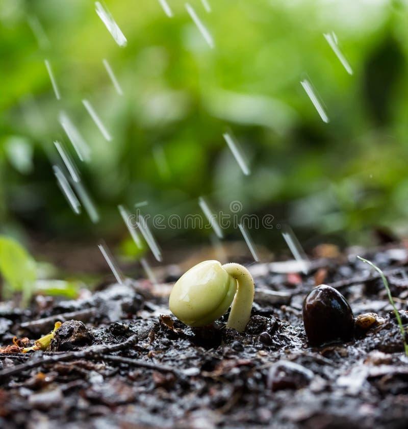 Planta pequena no solo no jardim e nos pingos de chuva imagem de stock royalty free