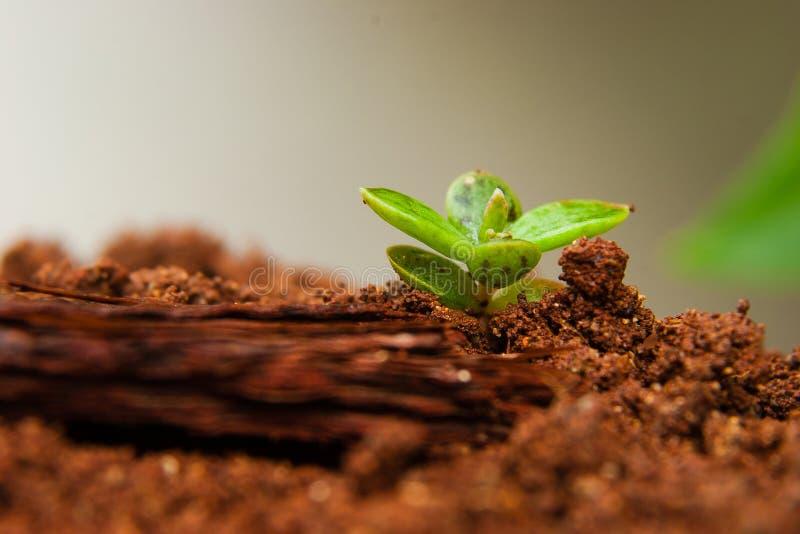 Planta pequena que cresce após a primavera imagem de stock royalty free