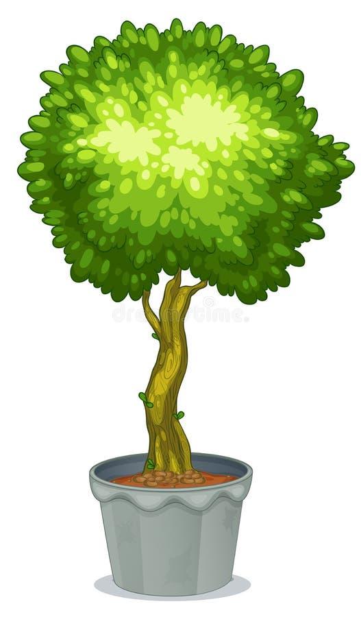 Planta Potted ilustração do vetor