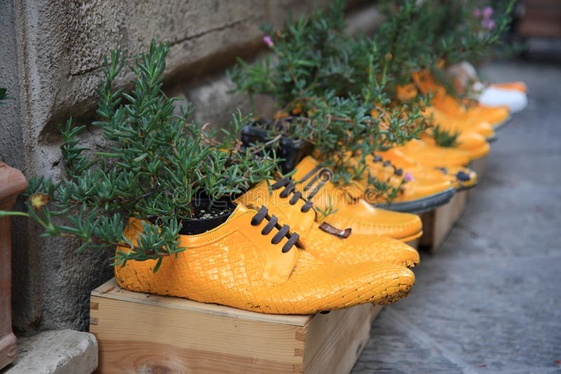Planta potted en zapatos amarillos imagen de archivo libre de regalías