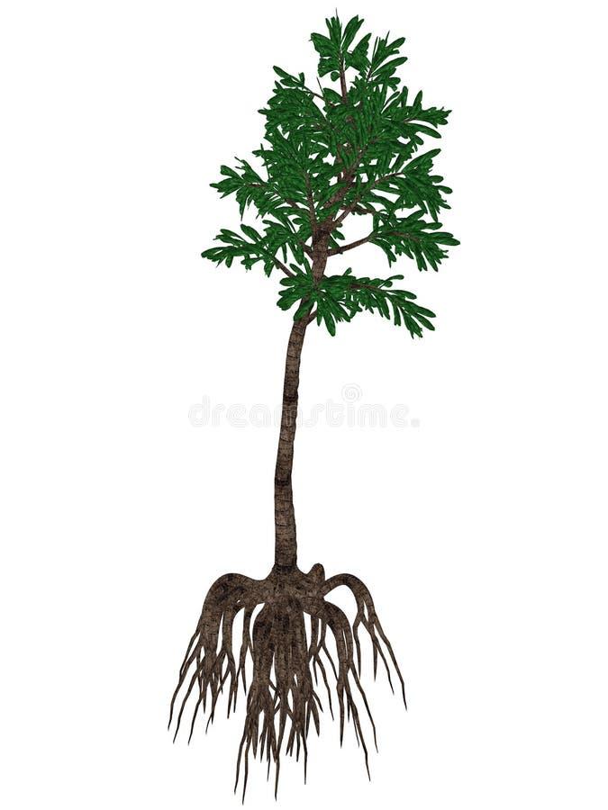 Planta prehistórica del angulostriatus del Cordaites - 3D rinden ilustración del vector