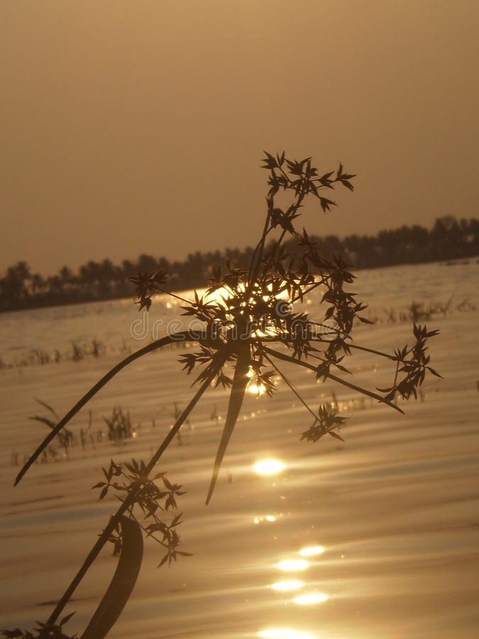 Planta - puesta del sol que brilla intensamente imágenes de archivo libres de regalías