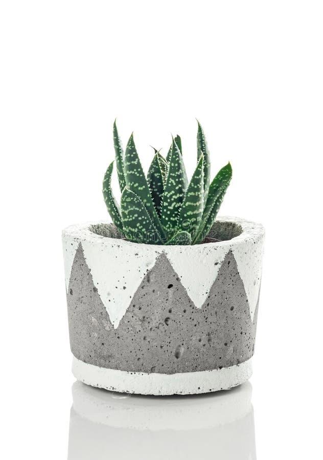 Planta punteada del áloe en un pote concreto hecho a mano imagen de archivo