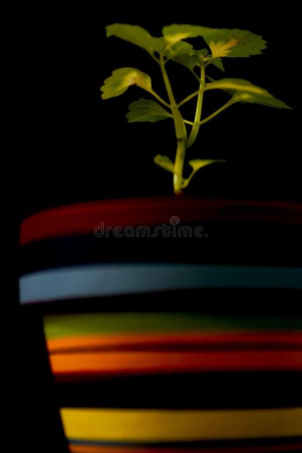 Planta que crece en un crisol coloreado fotos de archivo