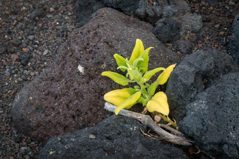 Planta que crece entre las piedras imagen de archivo