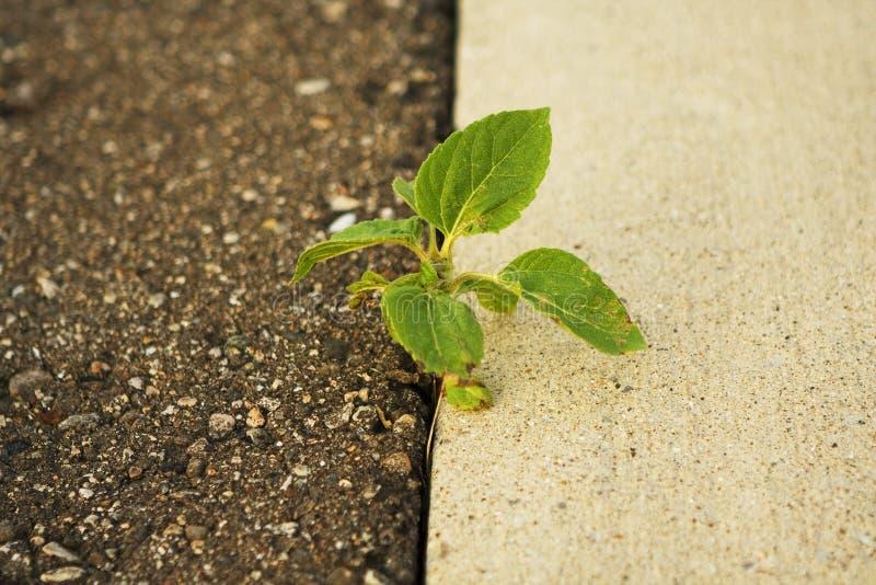 Planta que crece entre una apertura imagenes de archivo