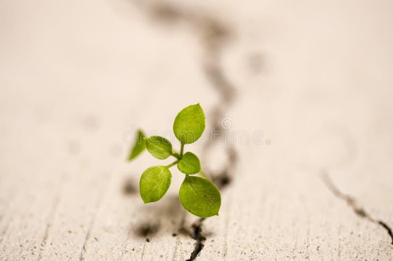 Planta que cresce através da quebra no pavimento fotos de stock royalty free