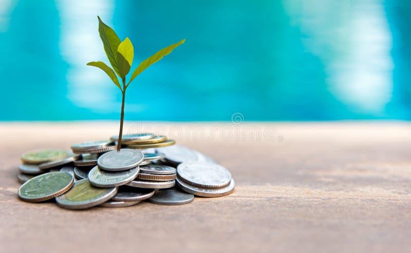 Planta que cresce em moedas das economias foto de stock royalty free