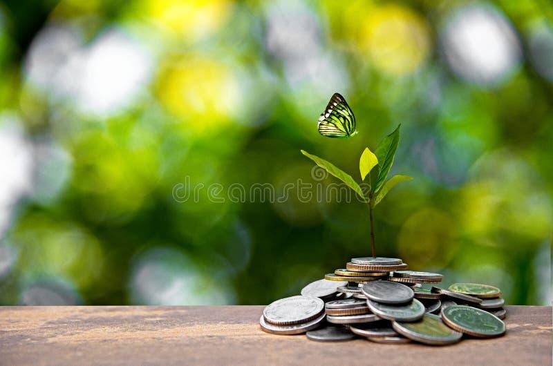 Planta que cresce em moedas das economias Gráfico crescente da pilha da moeda do dinheiro fotos de stock