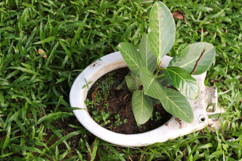 Planta que cresce fora do toalete imagens de stock royalty free