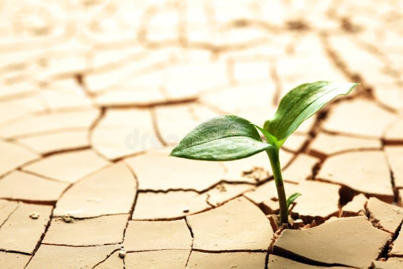 Planta que cresce na lama foto de stock